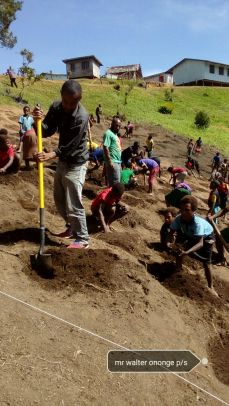Ononge Primary School kids working their potato farm - Ononge